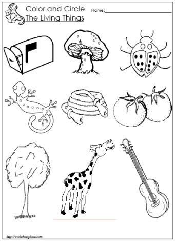 Circle the Living Things Worksheet