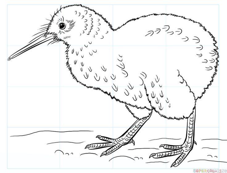31 kiwi vogel zum ausmalen downloaden