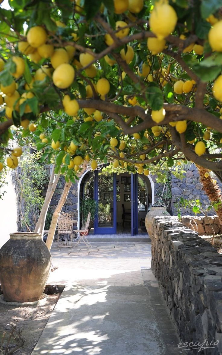 Underneath the lemon trees. Hotel Signum in Sicily. Italy #travel #europe #italy – Magda Schmid