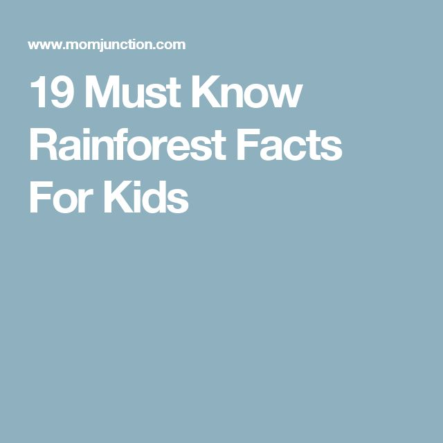 19 Must Know Rainforest Facts For Kids