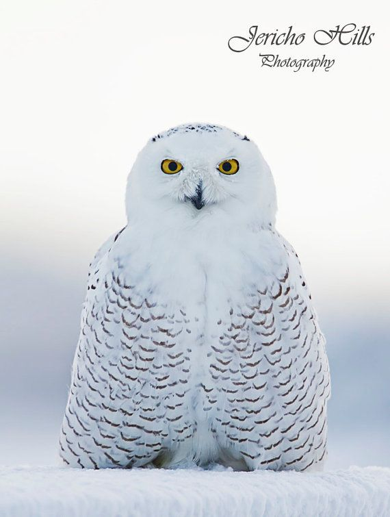 13 best polson images on pinterest montana flathead lake and snowy owl. Black Bedroom Furniture Sets. Home Design Ideas