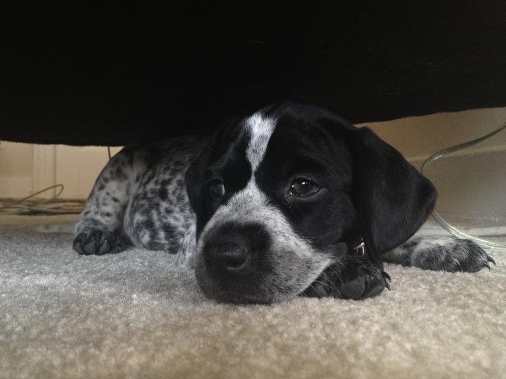 Pepper, Josepha's Dog