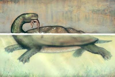 Una tortuga gigante de hace 60 millones de años. Liz Bradford