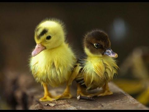 Малыши животных