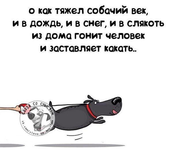 Прикольные фразочки в картинках №14814 » RadioNetPlus.ru развлекательный портал