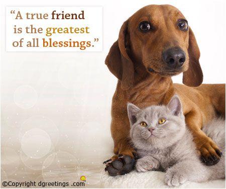 Bond between true friends is the strongest!