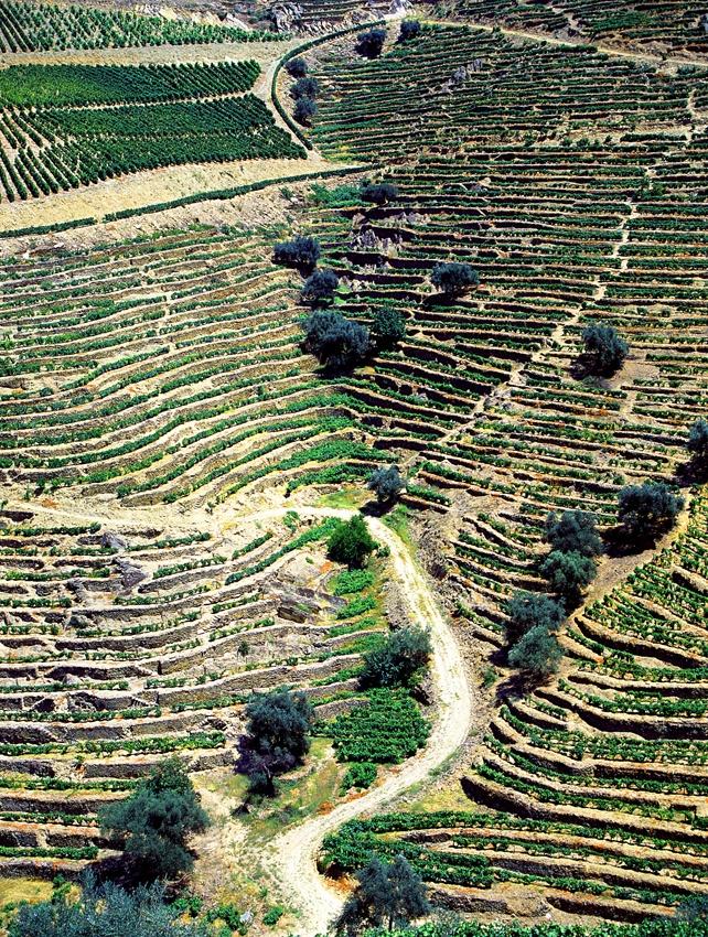 Quinta do Caêdo, Douro Valley, Porto and Northern Region, Portugal