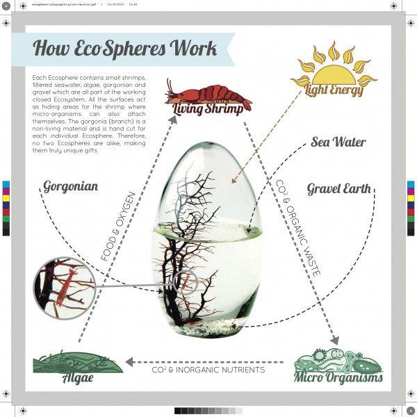 Ecosphere Closed Aquatic Ecosystem