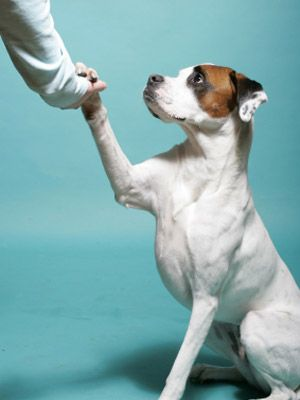 Instructions for Beginning Obedience Training