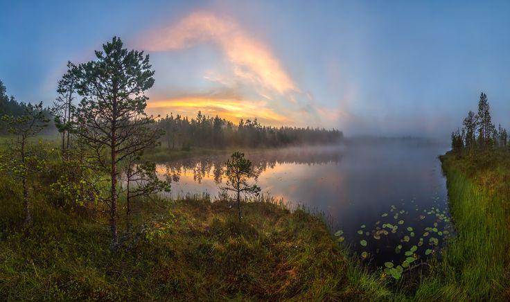 Сосны наберегу озера — National Geographic Россия