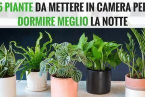 Metti una di queste 5 piante in camera per dormire meglio la notte e purificare l'aria