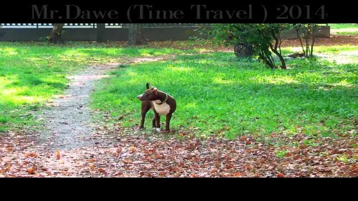 Mr Dawe ( Time Travel 2014 ) Official Music Videó