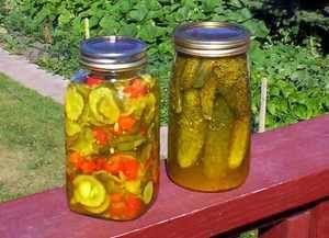 Di-lish! Homemade Dill Pickle Recipe the Mennonite Way