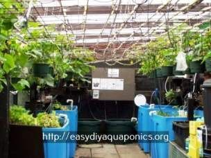 what is aquaponic farming - apartment aquaponics.aquaponics tank 7897931827
