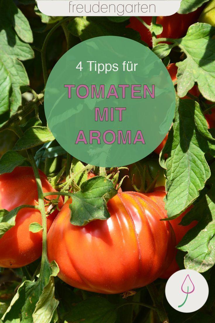 4 Tipps Zur Pflege Von Tomaten Pflanzen Im Garten Wie Dir Der Anbau Aromatischer Tomaten Gelingt Tomaten Gem Seanbau In 2020 Growing Vegetables Tomato Tomato Plants