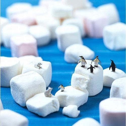 Penguins on marshmellows. How cool is that?