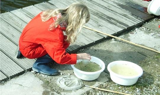 Kleine waterdiertjes zoeken in de sloot daar kun je uren mee bezig zijn op FarmCamps t' Oortjeshek. Hooi Hooi!