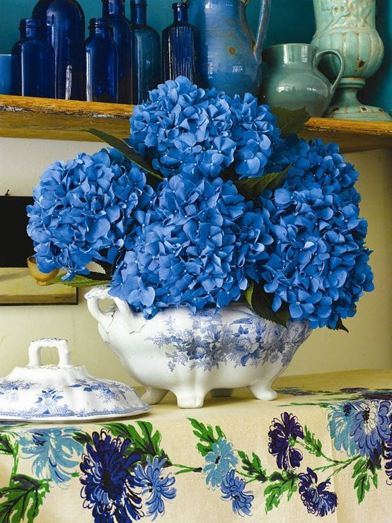 Blue hydrangeas in blue and white china
