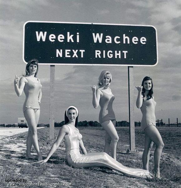 weeki wacheeFlorida Vintage, Weeki Waches Spring, Wachee Spring, Mermaid 1967, Weeki Wachee, Weeki Waches Mermaid, Spring Mermaid, Florida Vacations, Vintage Mermaid