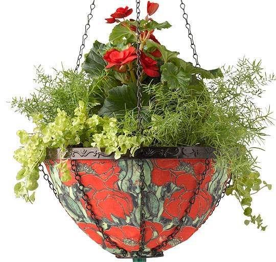 Como combinar plantas en macetas - Jardinería -  Los colores de la maceta se coordinan con los de las plantas: begonia tuberosa roja, helecho espárrago y regaliz verde pálido.