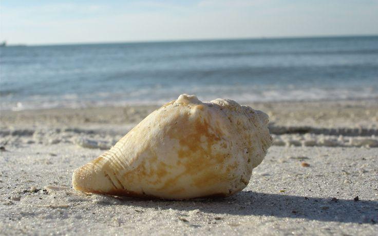 the beach   shell-on-the-beach.jpg