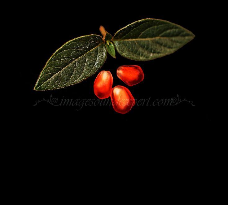 pomegranates, rodii, Granatapfel, grenades, winter holidays, sarbatori de iarna, Winterurlaub, vacances noel, christmas background, fundal craciun, weihnachten Hintergrund, fond noel,