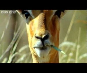 Funny Talking Animals - Leave it to the British to come up with this humor!Funny Talk, Animal Michelle1418, Talk Animal, Animal Videos, Funny Videos, Funny Animal, Animal Funny, British Accent, Bbc Funny