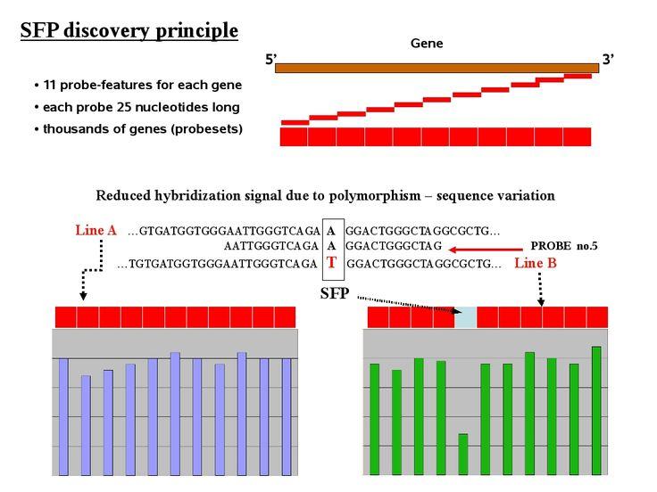 127 best images about Genetics & Molecular Biology on Pinterest ...