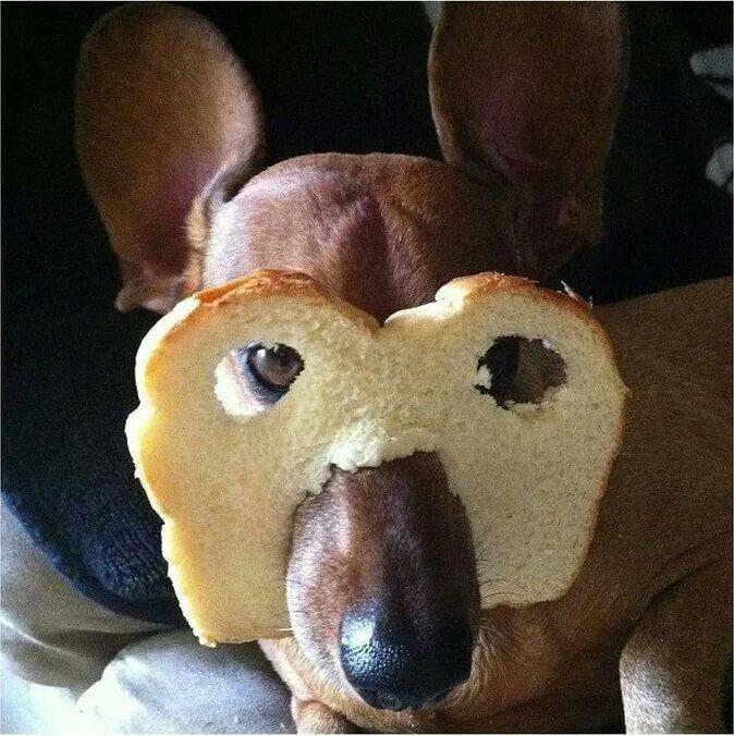 The famous bread bandit!