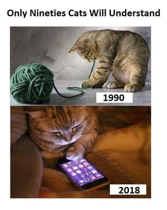 Its A Funny Way To Look How The Years Change Cats Too Funny Animal Memes Funny Animals Very Funny Pictures