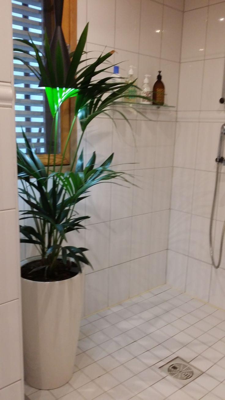 Suihkuhuone on loistava paikka kasveille. Tässä Salipalmu Howea forsteriana 30e ja Rondo 30 -ruukku  98e