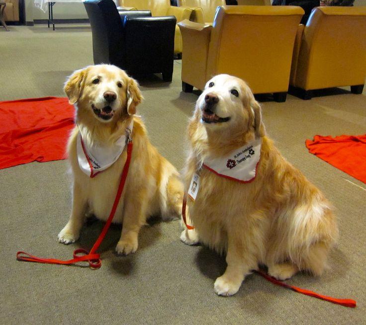 Bella S Rescue Dog Therapy Program