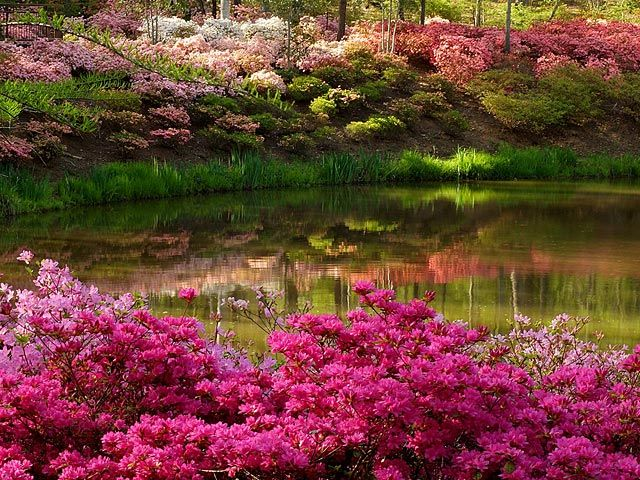 17 best images about screen savers on pinterest spring - Garden screensavers free ...