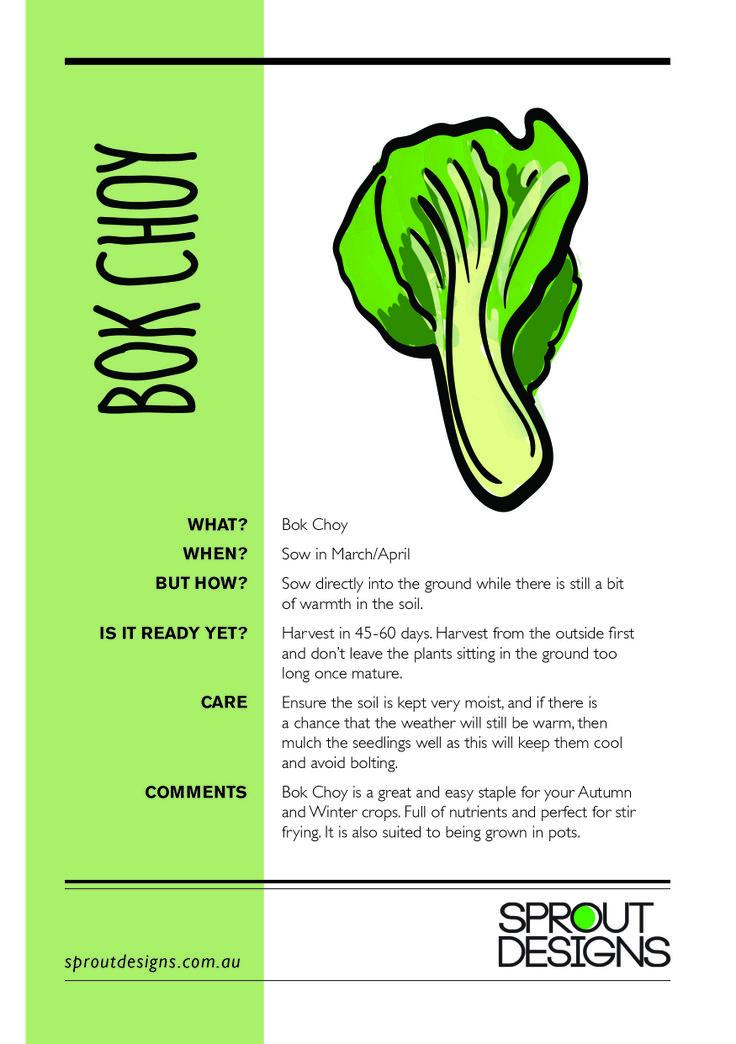 How to grow Bok Choy!