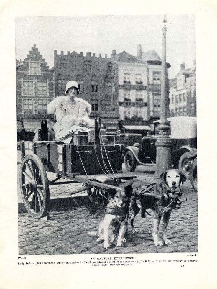 PRETTY LADY IN BELGIAN DOG CART LOVELY OLD ORIGINAL PRINT PAGE FROM 1934