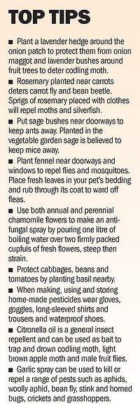 Natural Garden Tips...totally useful!