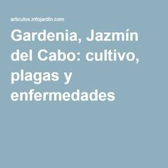 Gardenia, Jazmín del Cabo: cultivo, plagas y enfermedades