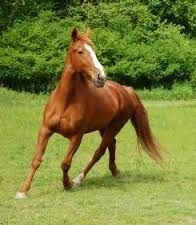 "At times I want to ride a chestnut horse over wide, undulating, endless steppes, Arthur Turfa © 2015  ""Places and Times""  https://www.google.com/search?q=chestnut+horse&safe=active&espv=2&biw=1366&bih=643&tbm=isch&tbo=u&source=univ&sa=X&ved=0CB0QsARqFQoTCKmT3Ou1lMYCFYaTgAodjkgOyA#imgrc=X-rvSnocbdKmbM%253A%3BU0DsI_ycWT0bwM%3Bhttp%253A%252F%252Fwww.everything-dream-horse.com%252Fimages%252F"