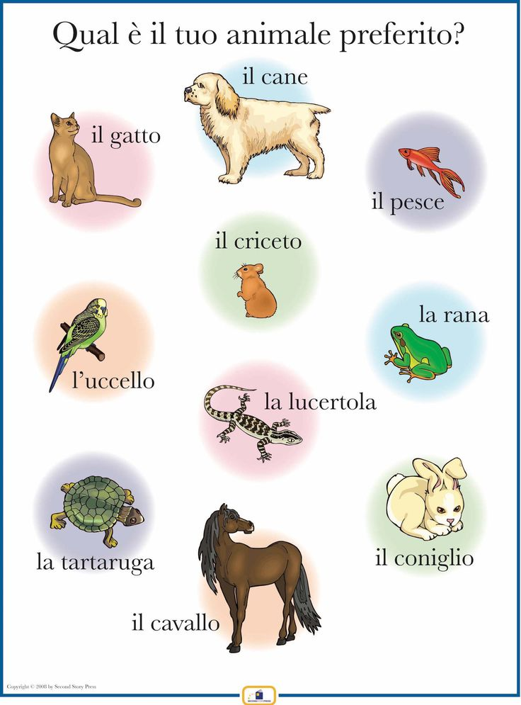 Introduce words for pets with this colorful 18 x 24 in. poster that includes a free guide with teaching suggestions and practice worksheets.
