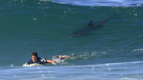 Un surfeur tué par un requin à l'Île de la réunion...
