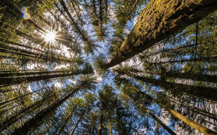 Scarica sfondi Moulton Falls, Yacolt, foresta, alberi, vista dal basso, vyoskie alberi, parchi nazionali USA, Washington, USA