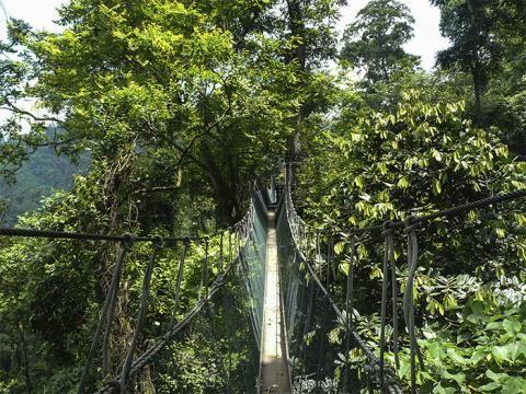 Seilbrücken von Taman Negara