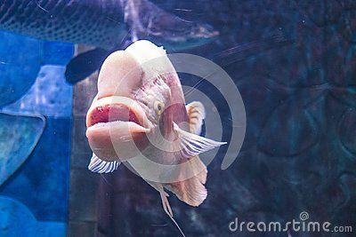 Sea fish swimming at the Dubai Mall Aquarium United Arab Emirates
