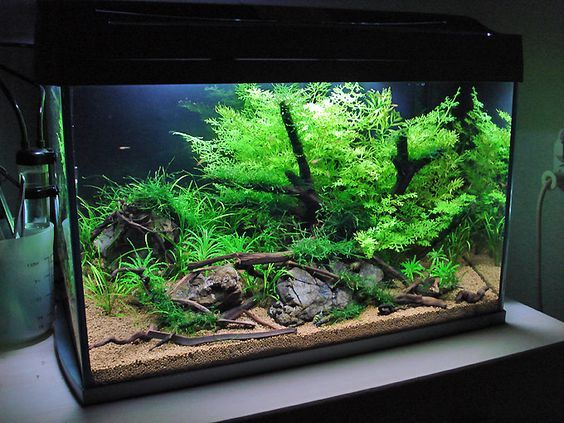 FANTASTIC step-by-step planted aquarium set up tutorial. An easy layout for every 10-15 gallon standard aquarium set.: