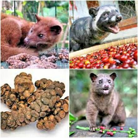 Try civet coffee in bali so amazing ....