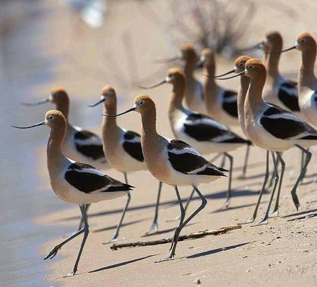 Beach life.... by Bird Story