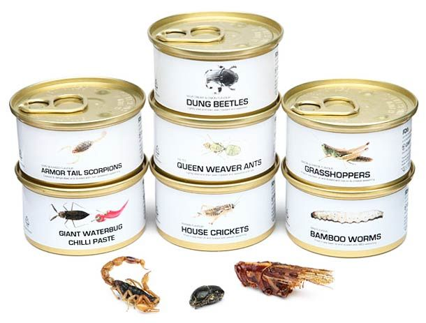 Edible-Bugs-Gift-Pack-2