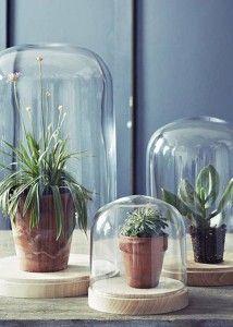 Planten zijn niet meer weg te denken uit het interieur. Onder een glazen stolp komen ze meer in het zicht. Combineer gevulde stolpen van verschillende formaten en ze zullen elkaar versterken. Vergeet alleen niet de planten water te geven.