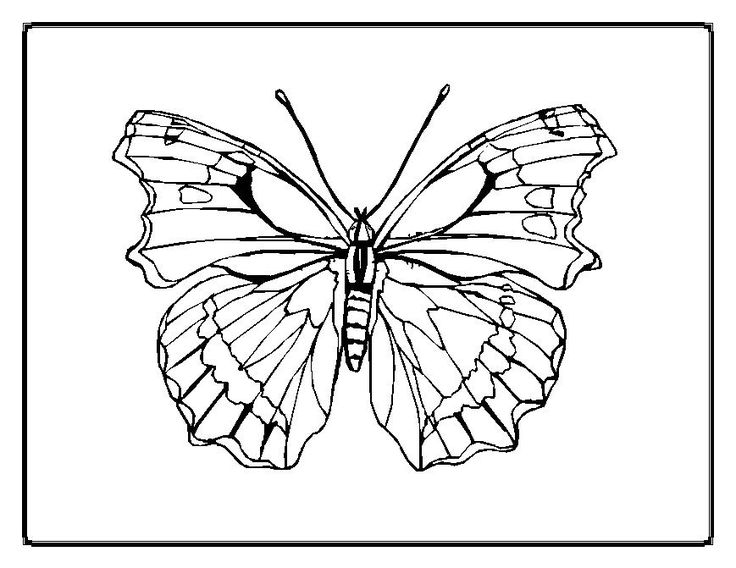 Nice Butterfly Coloring Pages For Adults Special Picture