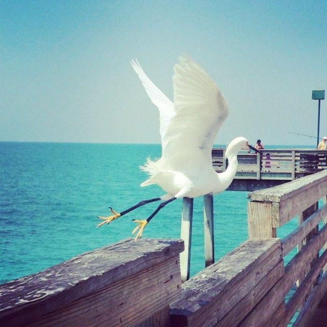 City of Venice, FL in Florida